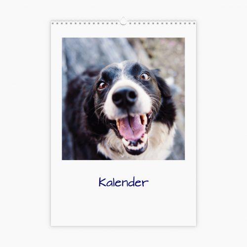 Fotokalender - Tierwelt